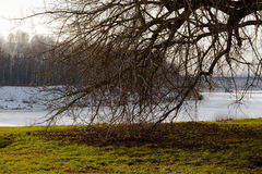 El árbol rameado Fotografía de archivo libre de regalías