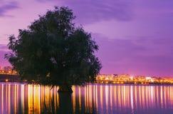 El árbol reflejó en agua con las luces de la ciudad en el fondo en la puesta del sol foto de archivo libre de regalías