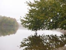 El árbol reflejó en el agua del río Potomac fotografía de archivo