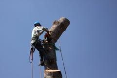 El árbol resuelve la motosierra Fotografía de archivo