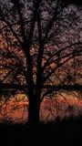 El árbol rojo Imágenes de archivo libres de regalías