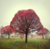El árbol rojo brillante se coloca en la niebla en otoño Foto de archivo