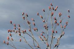 El árbol rosado del loro foto de archivo libre de regalías