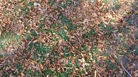 El árbol sale de otoño Imagenes de archivo