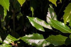 El árbol sale del fondo Imagen de archivo