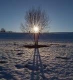 El árbol se coloca en el medio del campo con nieve de fusión en el fondo del sol poniente Fotos de archivo