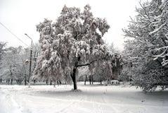 El árbol se cubre con nieve imagenes de archivo