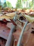 El árbol se va en caído en la tierra fotos de archivo libres de regalías