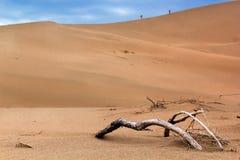 El árbol secado en el desierto, gente vaga a través de la arena Imágenes de archivo libres de regalías