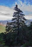 El árbol solamente en Sierra Bermeja Fotos de archivo