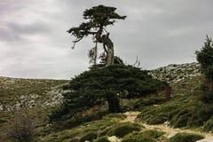 El árbol solamente en Sierra de las Nieves Imagenes de archivo