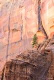 El árbol solitario imagen de archivo