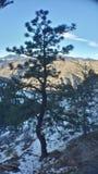 El árbol solitario Imágenes de archivo libres de regalías