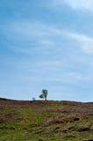 El árbol solitario en una colina Fotografía de archivo