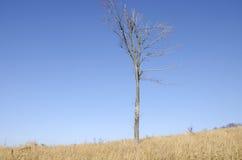 El árbol solo Fotografía de archivo