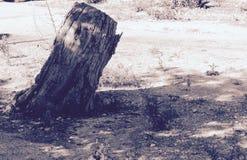 El árbol solo Foto de archivo libre de regalías