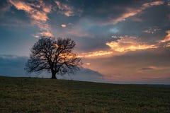 El árbol solo en Bulgaria Imagen de archivo