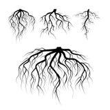 El árbol subterráneo arraiga vector De la planta raíces subterráneo fijadas Negro de la raíz del árbol ejemplo de la raíz de la s ilustración del vector