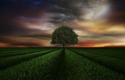 El árbol verde Fotografía de archivo libre de regalías