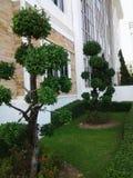 El árbol verde Fotos de archivo