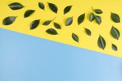 El árbol verde deja el modelo en fondo amarillo y azul Imágenes de archivo libres de regalías