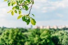 El árbol verde deja el primer con horizonte borroso de la ciudad Foto de archivo libre de regalías