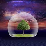 El árbol verde está bajo protección Imagen de archivo
