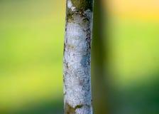 El árbol verde parte la fotografía común del fondo Foto de archivo