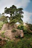 El árbol viejo Foto de archivo libre de regalías