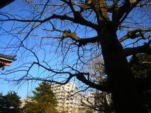 El árbol viejo Fotografía de archivo libre de regalías