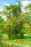 El árbol viejo Imágenes de archivo libres de regalías