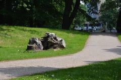 El árbol viejo cortó maneras del tronco y del lado en un día soleado fotografía de archivo libre de regalías