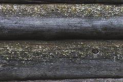 El árbol viejo es afectado por el molde Fotografía de archivo libre de regalías