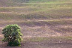 El árbol viejo y las ondas de tierra resumen paisaje del minimalismo Fotos de archivo libres de regalías