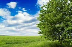 El árbol y el campo. Imagen de archivo