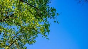 El árbol y el cielo Imágenes de archivo libres de regalías
