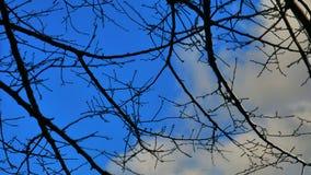 El árbol y el cielo Fotos de archivo