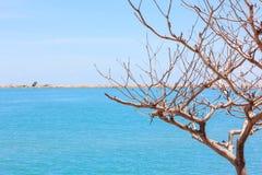 El árbol y el fondo del cielo azul del mar Foto de archivo