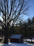 El árbol y el granero grandes en la puesta del sol en un día de invierno Imagen de archivo libre de regalías
