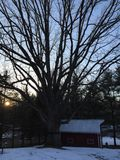 El árbol y el granero grandes en la puesta del sol en un día de invierno Fotos de archivo libres de regalías