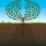 El árbol y su sistema de la raíz Imagen de archivo