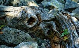 El árbol y su tiempo fotos de archivo libres de regalías