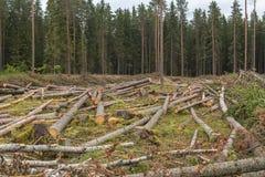 El área del bosque derribado Foto de archivo