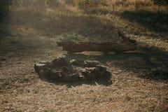 El área para una barbacoa en una hierba verde de un prado del jardín Los bancos hechos a mano de madera se pintan con la pintura  Foto de archivo libre de regalías