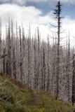 """El †del incendio fuera de control """"quemó árboles en bosque en los E.E.U.U. Imagenes de archivo"""