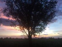 El 🌠de división del árbol… foto de archivo libre de regalías