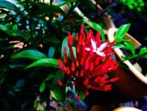 el único que florece Fotografía de archivo