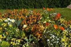 el ‹del †del ‹del †del mar del ‹del †del ‹del †florece, los wildflowers Imagenes de archivo