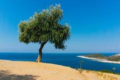 el马德里槽牙晚上橄榄色场面结构树 图库摄影