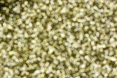 El Año Nuevo de oro Foto de archivo libre de regalías